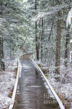 Cranberry Glades Boardwalk with Snow by Thomas R Fletcher