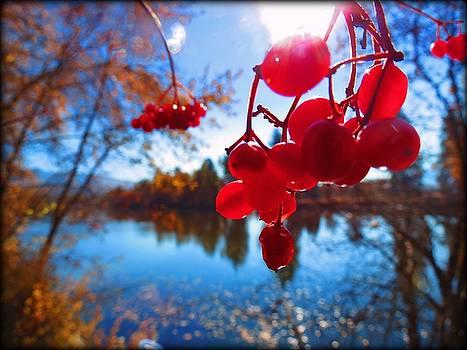 Leah Grunzke - Cranberrybush