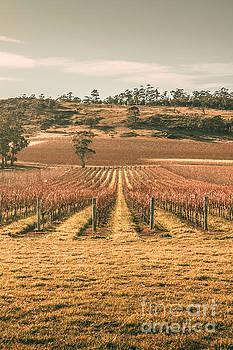 Cranbrook vineyard by Jorgo Photography - Wall Art Gallery