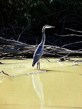 Crane At Bosque Wildlife Refuge by Joseph Frank Baraba
