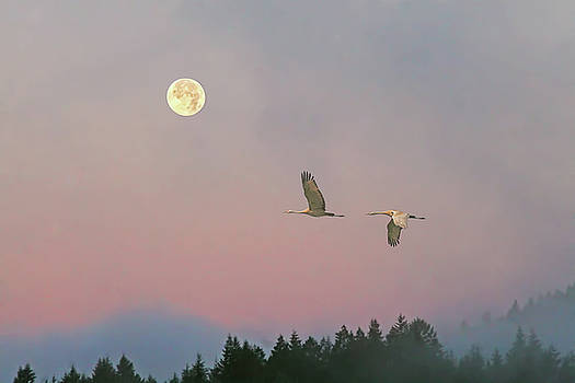 Peggy Collins - Cranes and a Full Moon at Dawn