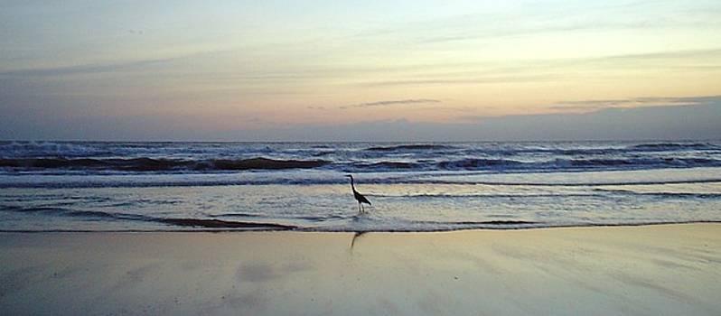Crane's Breakfast Stroll by Cheryl Waugh Whitney