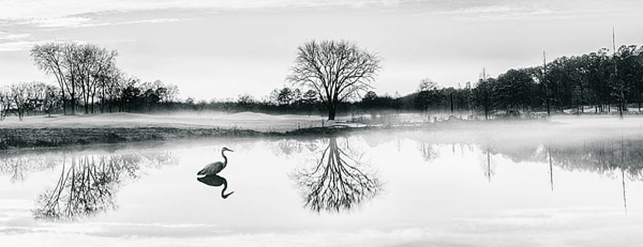 Crane's world by Ahmed Shanab