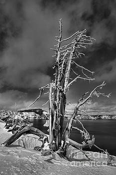Adam Jewell - Crater Lake Dead Trees Portrait - Black And White