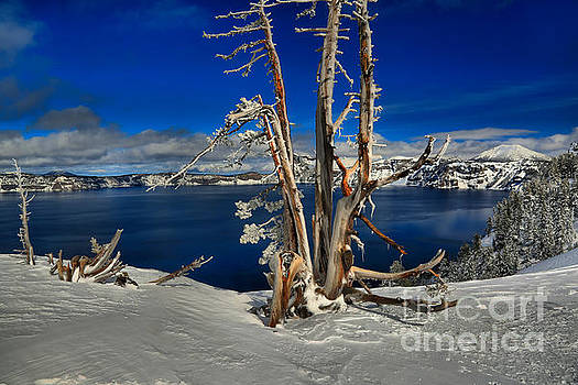 Adam Jewell - Crater Lake Winter Dead Wood
