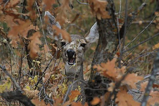 Crazy Deer by Douglas Smith
