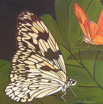 Cream and Orange Butterflies by Lisa Prusinski