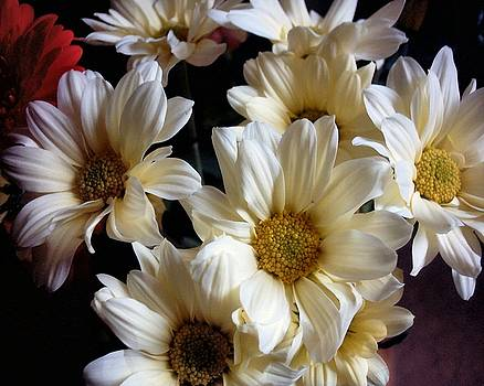 Cream Daisies by Susan  Epps Oliver