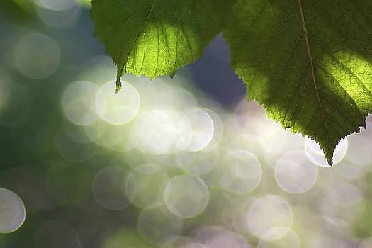Creative Light by AugenWerk Susann Serfezi