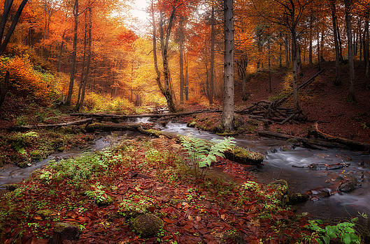Creek at autumn forest by Nickolay Khoroshkov