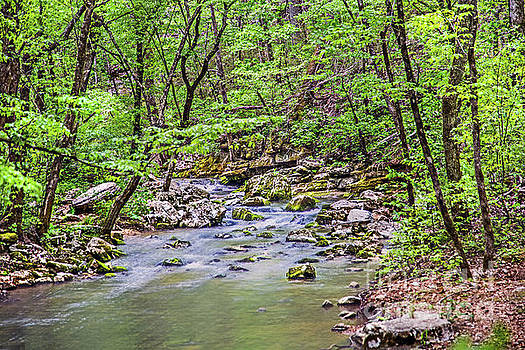 Creek at Blanchard Springs by Dragonfleyes Photography and Creations