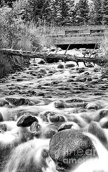 Darcy Michaelchuk - Creek at Wildstone BW