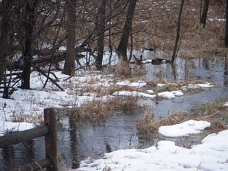 Creek in Winter by Deborah Finley