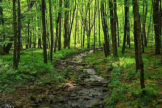 Creek Leading to the Delaware River by Raymond Salani III