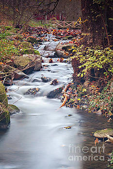 Creek waterfall in forest by Sophie McAulay