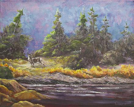 Creekside Deer by Ann Arensmeyer
