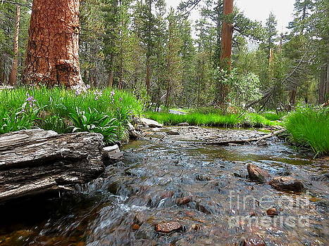 Creekside by Paul Foutz