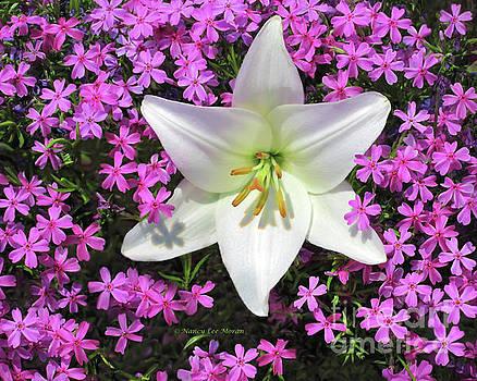 Creeping Fuchsia Phlox with Lily by Nancy Lee Moran