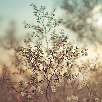 Creosote Bush at Sunset by Sarah Beth Smith