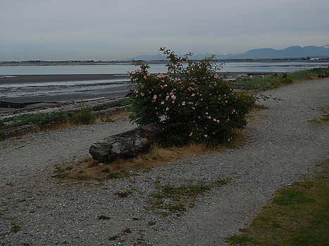 Crescent Beach and the wild Nootka Rose by Catherine Robertson