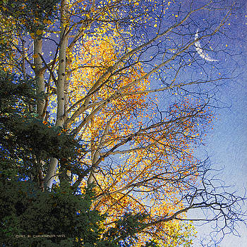 Crescent Moon Through The Branches by R christopher Vest