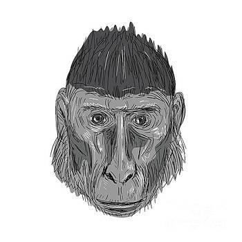 Crested Black Macaque Head Drawing by Aloysius Patrimonio