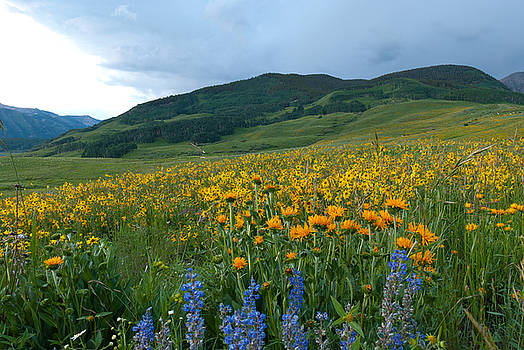Crested Butte Evening Wildflowers and Mountains by Cascade Colors