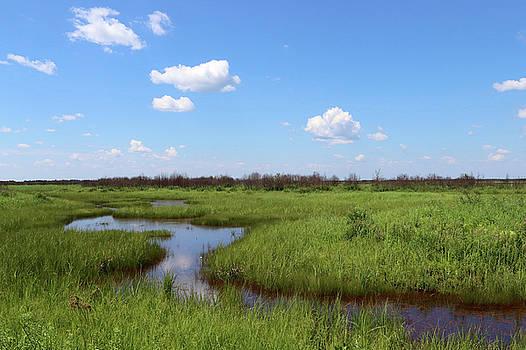 Crex Sedge Meadow by Sarah Lilja