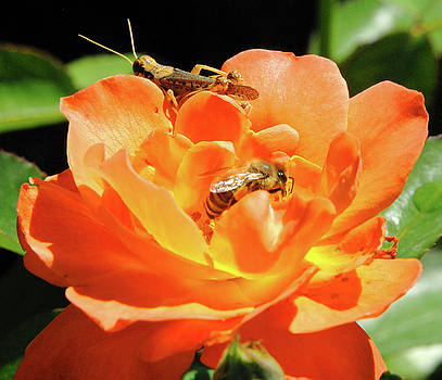 Cricket and the Bee by Michelle Halsey