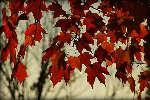 Crimson Red Autumn Leaves by Chris Berry