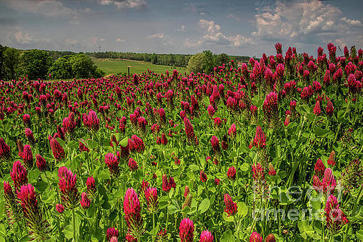 Barbara Bowen - Crimson Clover Patch