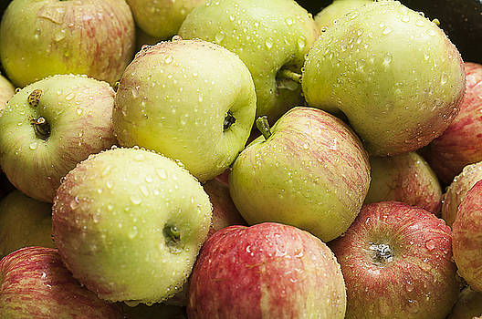 Crisp Wild Apples by Kathryn Whitaker