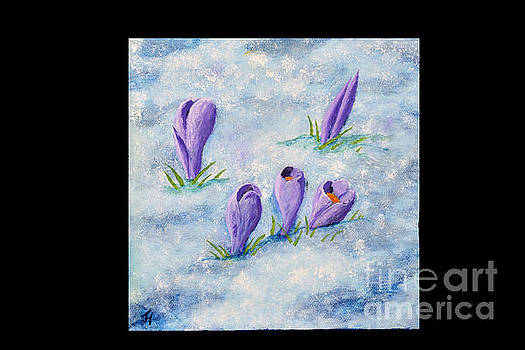 Crocus in the Snow by Jack Hedges