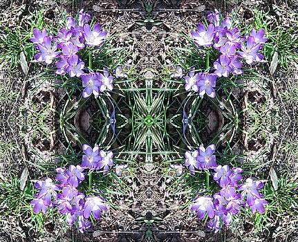 Crocus Mandala 1 by Julia Woodman