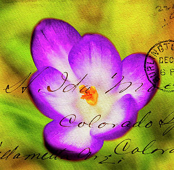 Crocus overlaid with Envelope impression. by Paul Cullen