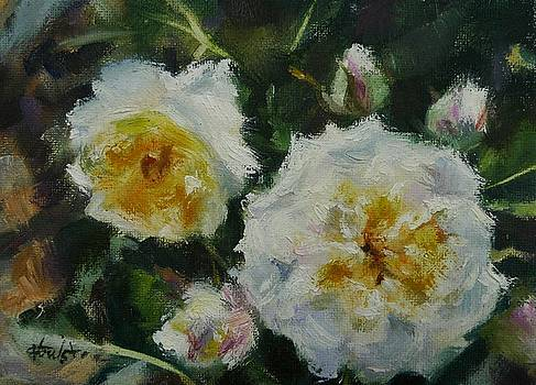 Crocus Rose by Veronica Coulston