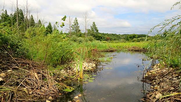 Crooked Creek Preserve by Kimberly Mackowski