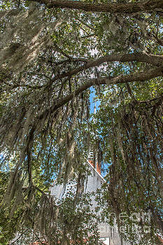 Dale Powell - Cross View through the Spanish Moss