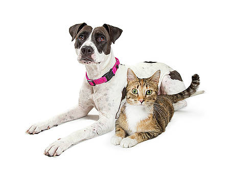 Crossbreed Dog and Tabby Cat Lying Down Together by Susan Schmitz