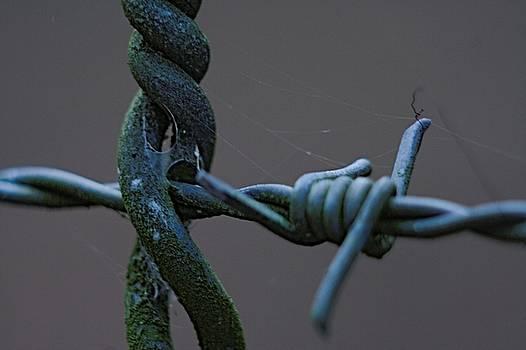 CrossWired by Sean Green