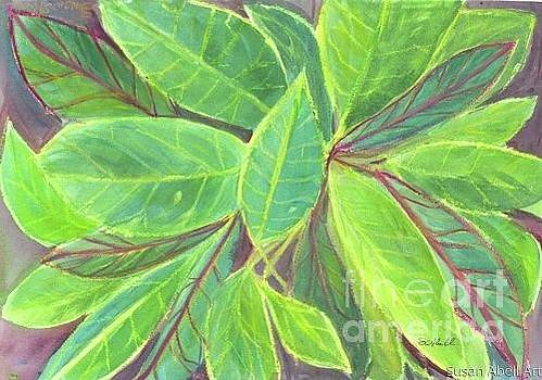 Croton by Susan Abell