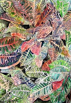 Croton tropical art print by Derek Mccrea