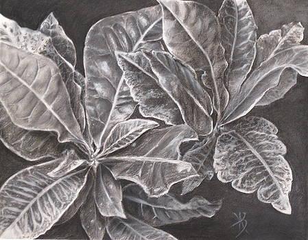 Crotons by Karen Boudreaux