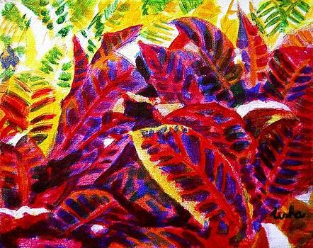Usha Shantharam - Crotons Sunlit 1