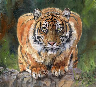 Crouching Tiger by David Stribbling