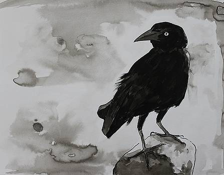 Crow by Amela Subasic