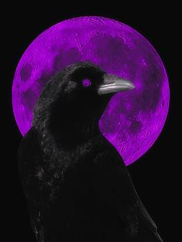Crow And The Purple Moon by Gothicrow Images