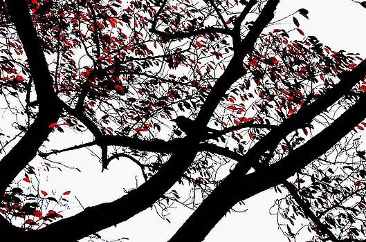 Dean Harte - Crow and Tree in Black White and Red