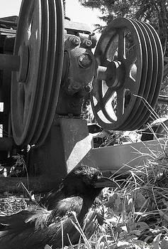 Alana  Schmitt - Crow gears 1