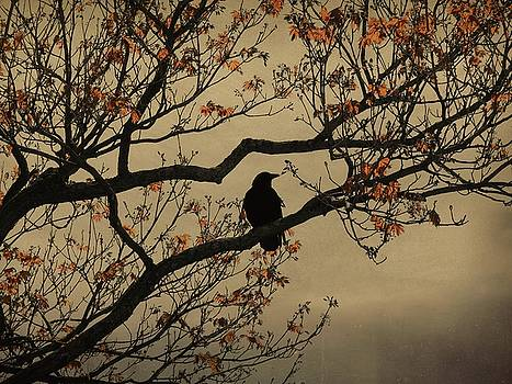 Crow In A Tree With Orange Leaves by Gothicrow Images
